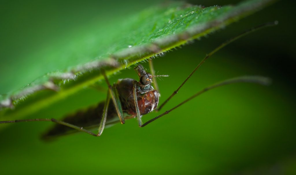 insect, nature, animals