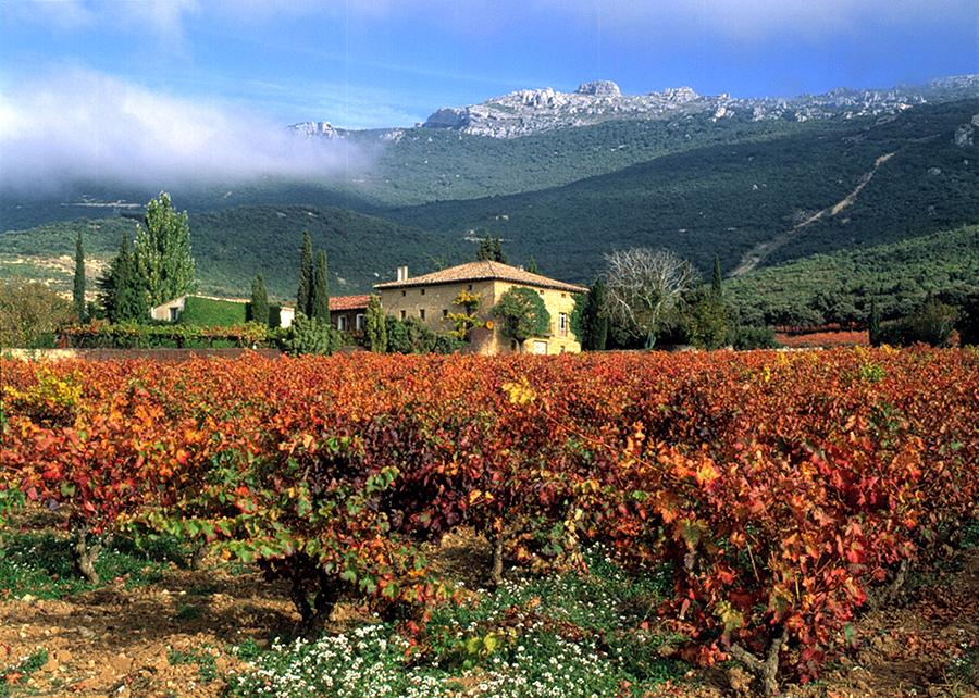 vingården remelluri i rioja